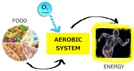 aerobic-system