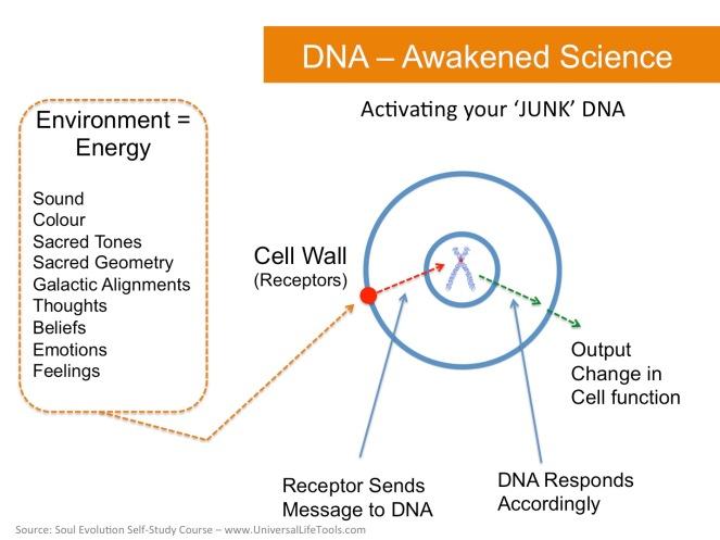 Awakened-Science-DNA-2