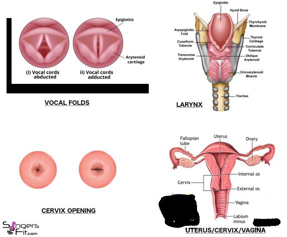 Larynx_Cervix