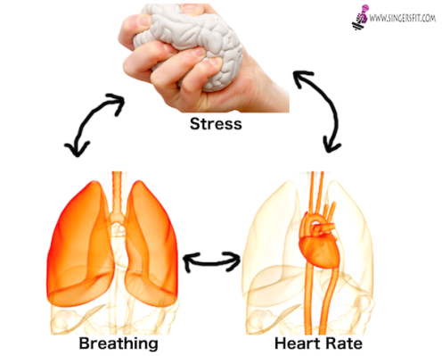 Stress_Heart_Lungs